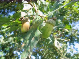 bosco-delle-viole-farnia